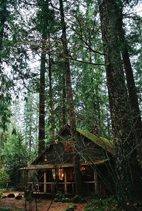 cabin, forest, moss, woods