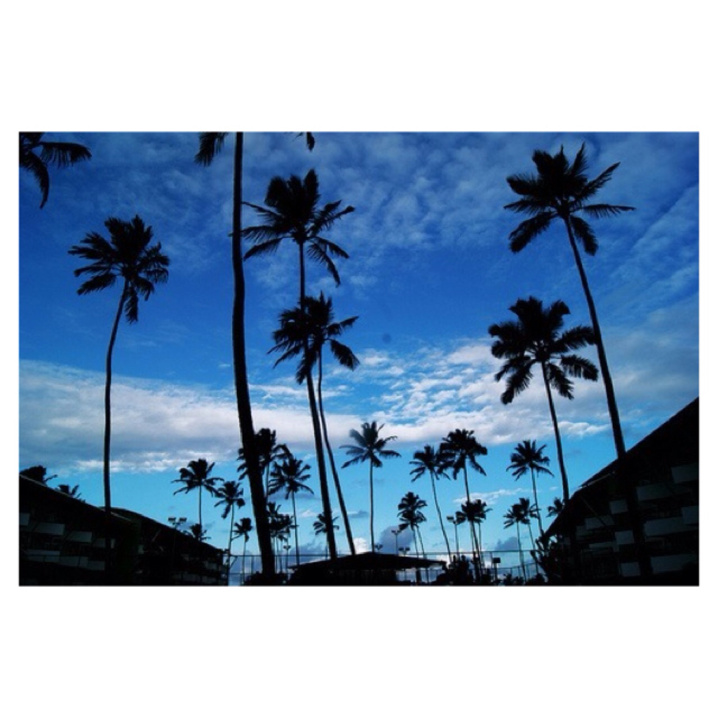 palm, palm tree, palm trees and summer