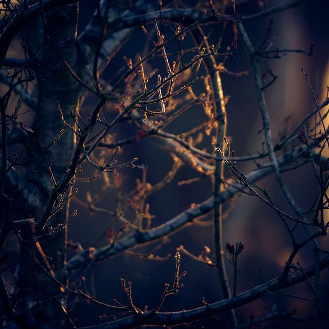 branches, forest, light and nature
