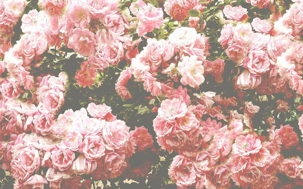 Pink grunge background tumblr