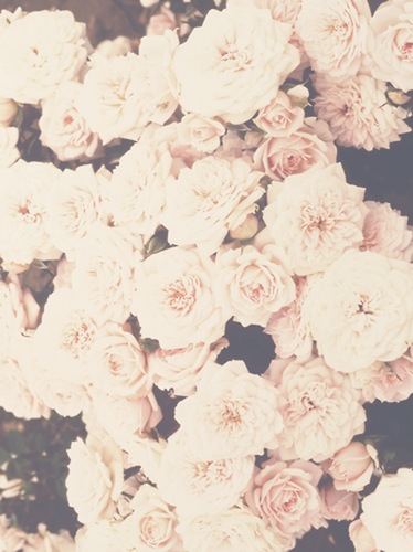 dream, live, roses, wallpaper