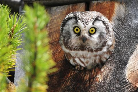 animal, bird, forest and owls