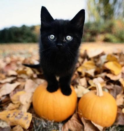 http://s3.favim.com/orig/141104/animal-autumn-beautiful-black-Favim.com-2208493.jpg