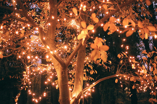 autumn, fall, gold, lights, nature, tree, sparkle in so cal contest