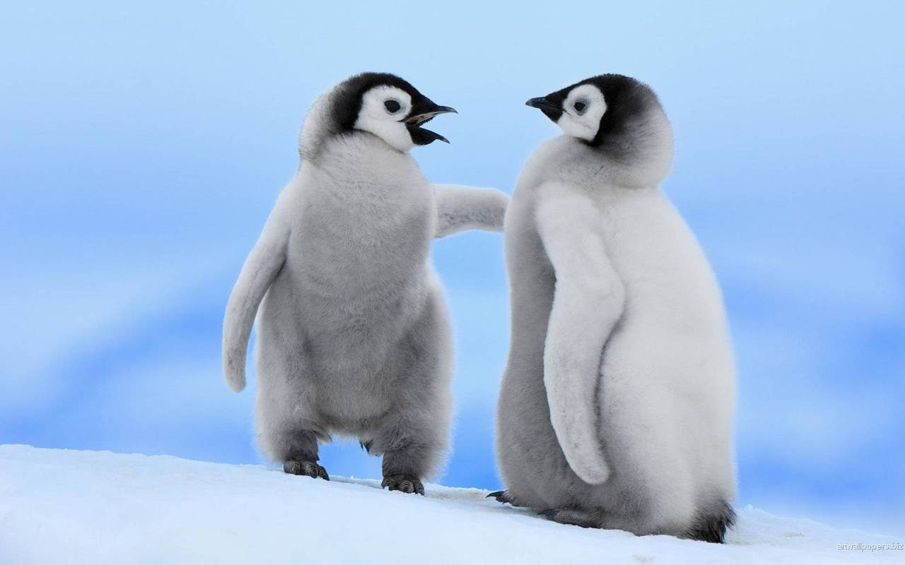 adorable, animals, cute, penguins