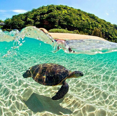 beach, beautiful, clear water and love