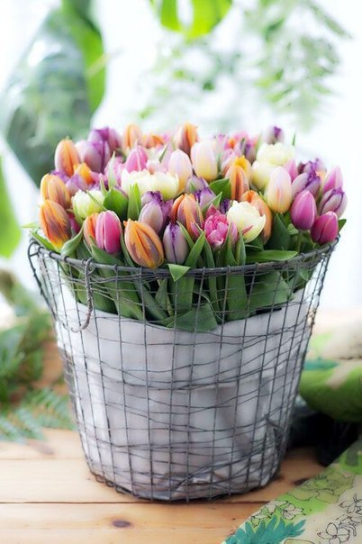 beautiful, colors, flowers and march