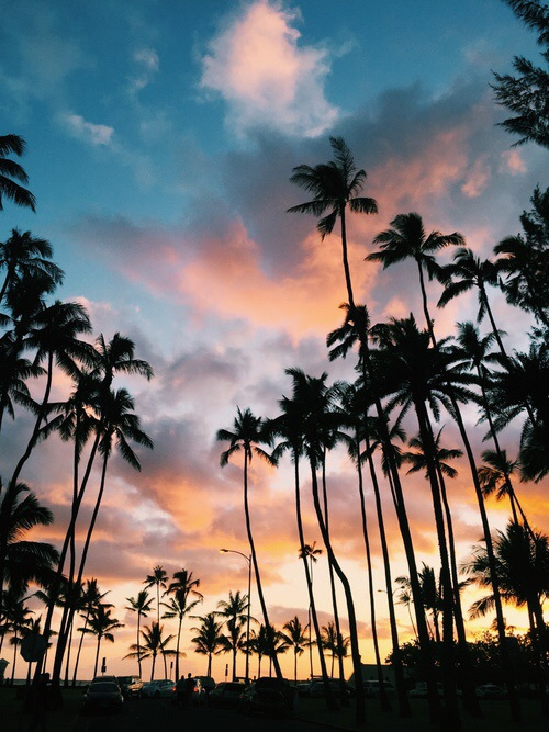 beach, colors, la, losangeles, night, palmtrees, sky, summer