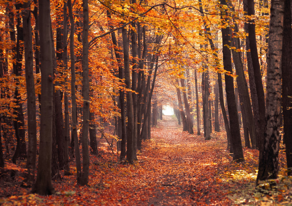 autumn, cute, fall, forest, orange, path, trees, woods