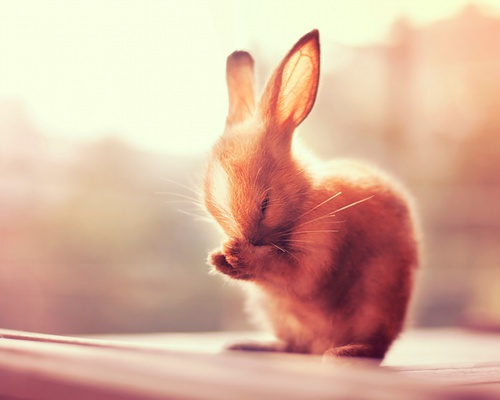 animal, baby, bunny, carrots, cute, ears, eyes, fashion, girls, hairstyle, house, hugs, kisses, love, morning, nose, paws, pet, playing, running, sleeping, sun, tail, wallpaper