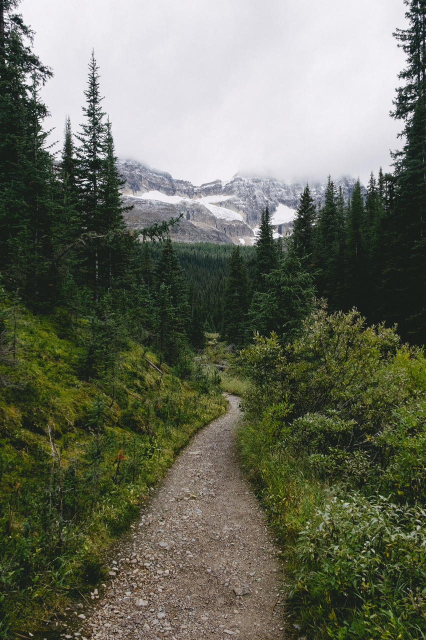 adventure, beautiful, explore, forest, green, landscape, mountain, nature, path, road, travel, trees, world