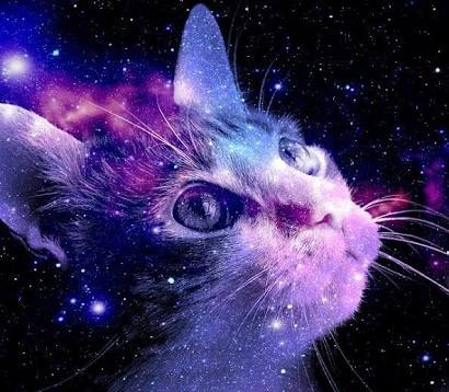animals backgrounds cats galaxy hipster image