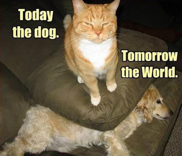 lol, oh no, cats cats cats cats and pray for the dog
