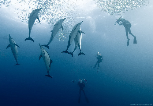 adorable, amazing, animal, animals, awesome, beautiful, blue, dolphin, landscape, nature, ocean, people, place, sea, underwater, water