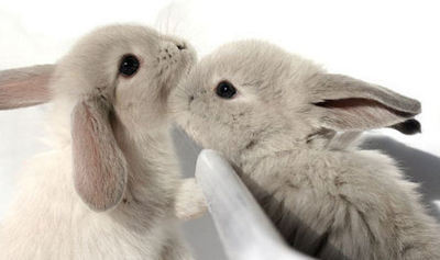 adorable, bunnies, bunny, cute, rabbit