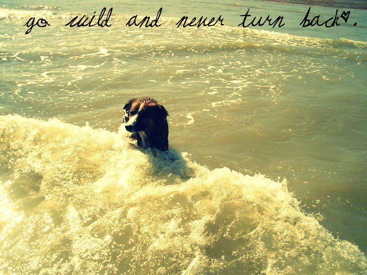 adore, be free, beach, cute, dog