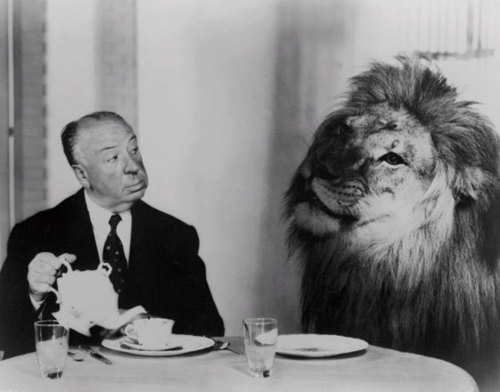 alfred hitchcock, black and white, feline, lion, tea