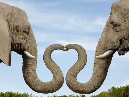 amazing, animal, beautiful, cool, elephant, heart, love, true, wonderful