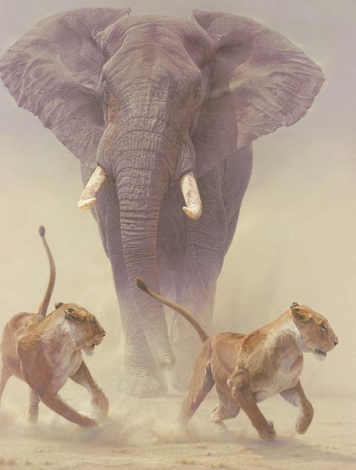 amazing, animals, elephant, elephants, lion