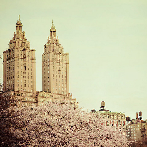 america, architecture, beautiful, blossoms, buildings