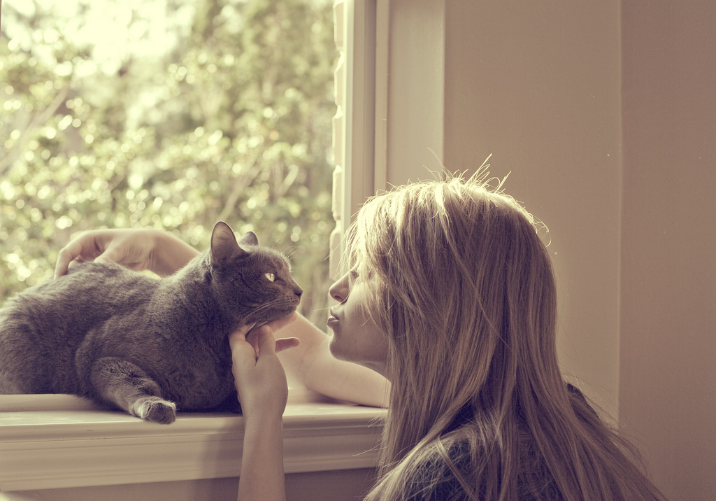 animal, beautiful, bedroom, blonde, cat