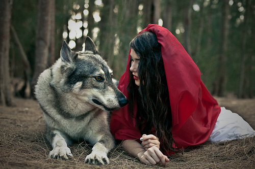 animal, girl, little red riding hood, nature, wolf