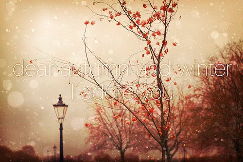 arbol, autumn, beautiful, bokeh, city