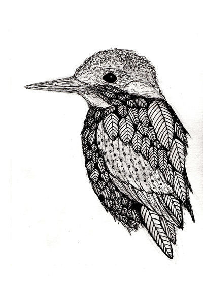 art, b&w, bird, draw, drawing