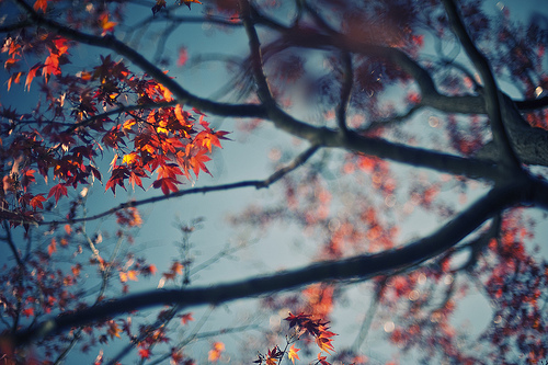 autumn, autunm, beautiful, blue, branch