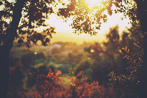 autumn, beautiful, bush, colorfull, dream, landscape, light, nature, perfect, photography, picture, sun, sunset, sunshine, tree