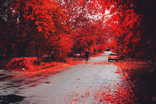 autumn, cute, flower, leaves, people, photography, red, road, street, walking