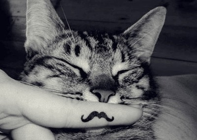 b&w, cat, cute, moustache, mustache