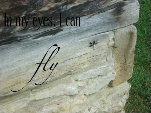 beautiful, beauty, believe, bug, dragon, dragonfly, eyes, fly, grass, hipster, indie, insect, inspiration, inspire, lettering, nature, outdoors, pretty, quote, rock, saying, vintage, wood