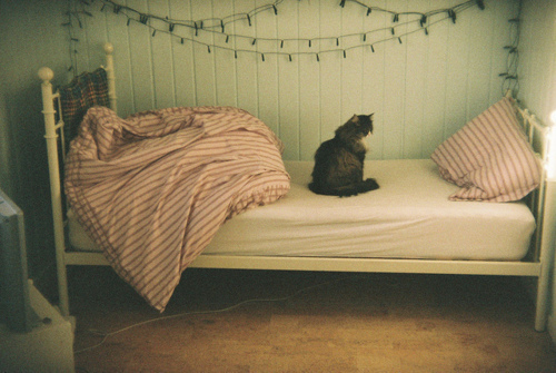 bed bedroom cat christmas light image 314332 on