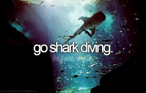 before i die, blog, blue, bucket list, diving, lov, perfectbucketlist, scary, sea, shark, sharks, summer, text, typography