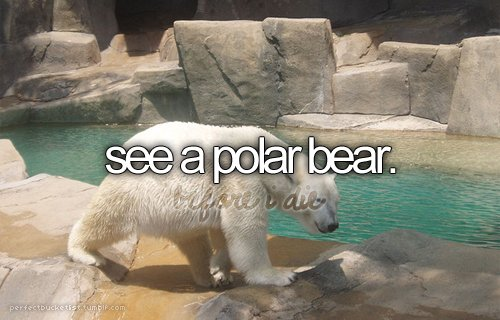 before i die, bucket list, perfectbucketlist, polar bear, upclose&personal