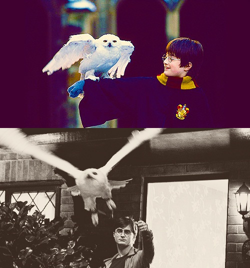 bird, birds, black and white, daniel radcliffe, harry