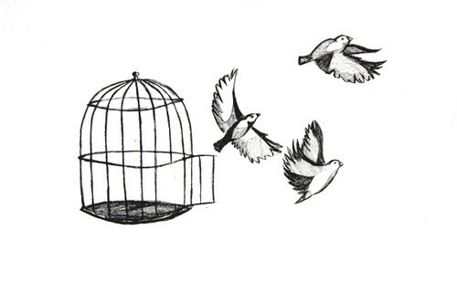 birds, draw, free, freedom