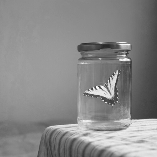 black and white, butterfly, glass, sad