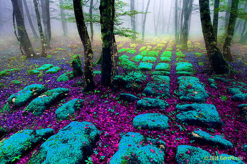 blue, green, heaven, purple, rocks, trees, woods