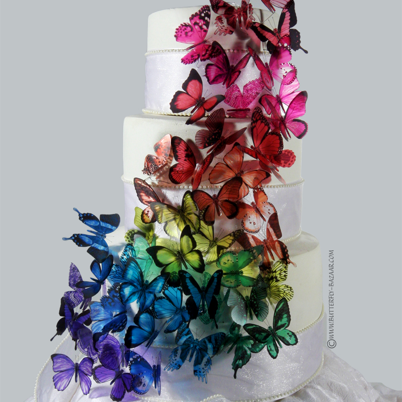 butterfly, butterfly cake, cake, candy, color