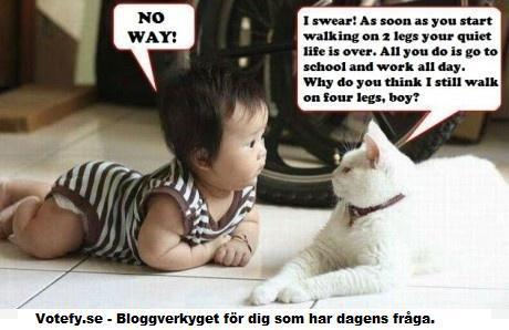 cat, funny, kid, leg, school