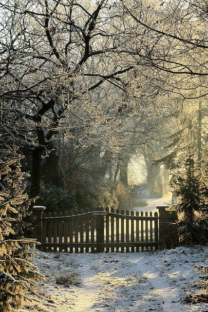 cold, forest, gate, home, house