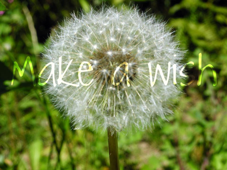 dandelion, love, make a wish, nature, perfect