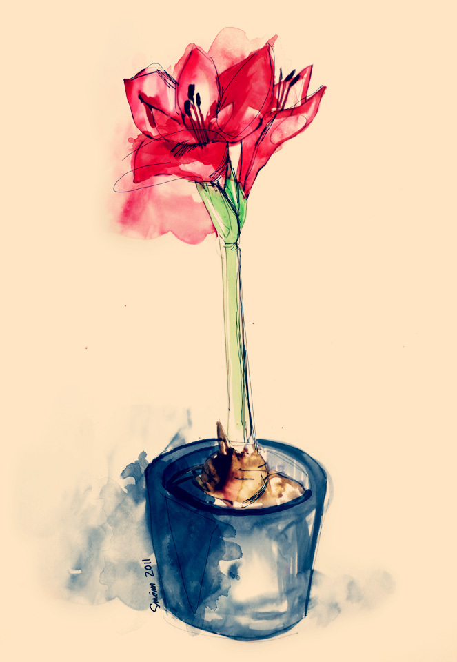 drawing, flower, illustration