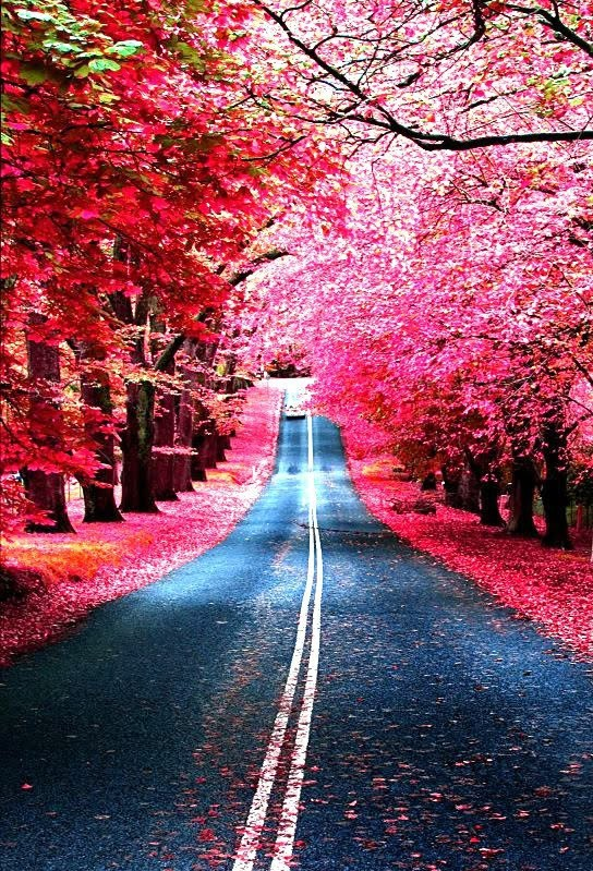 flowers, pink, road, spring blossoms