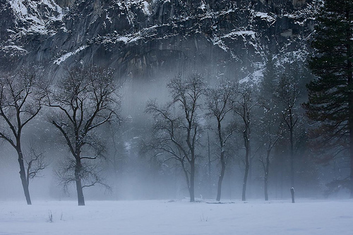 fog, forest, mist, moutons, photo, photography, snow, trees, winter