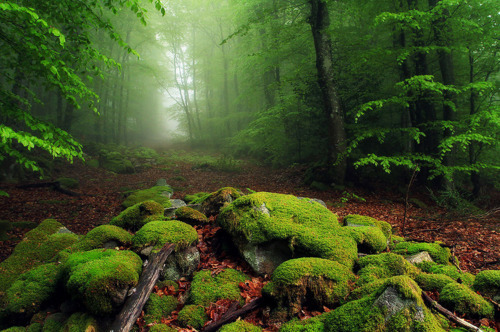 forest, grass, green, landscape, leaf