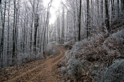 forest, path, pathway, track, winter