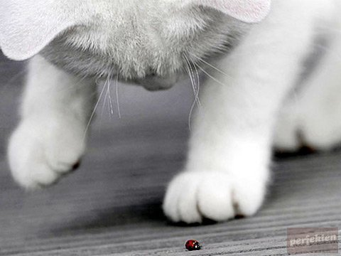 adorable, animal, black and white, bug, cat, cute, kitty, red